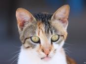 cute-cat-repel