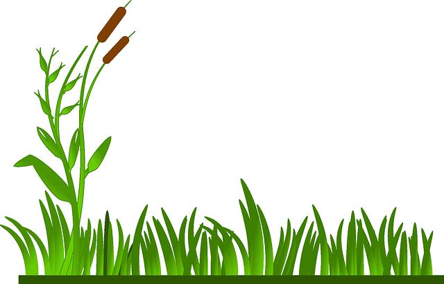 grass-312104_640